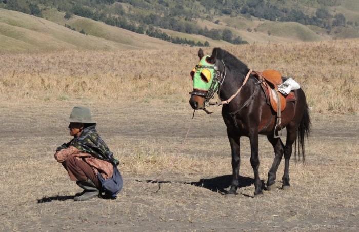kuda-di-gunung-bromo-960x620
